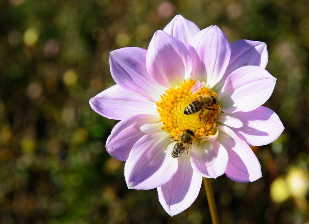 20 mayo_dia mundial de las abejas_calendario