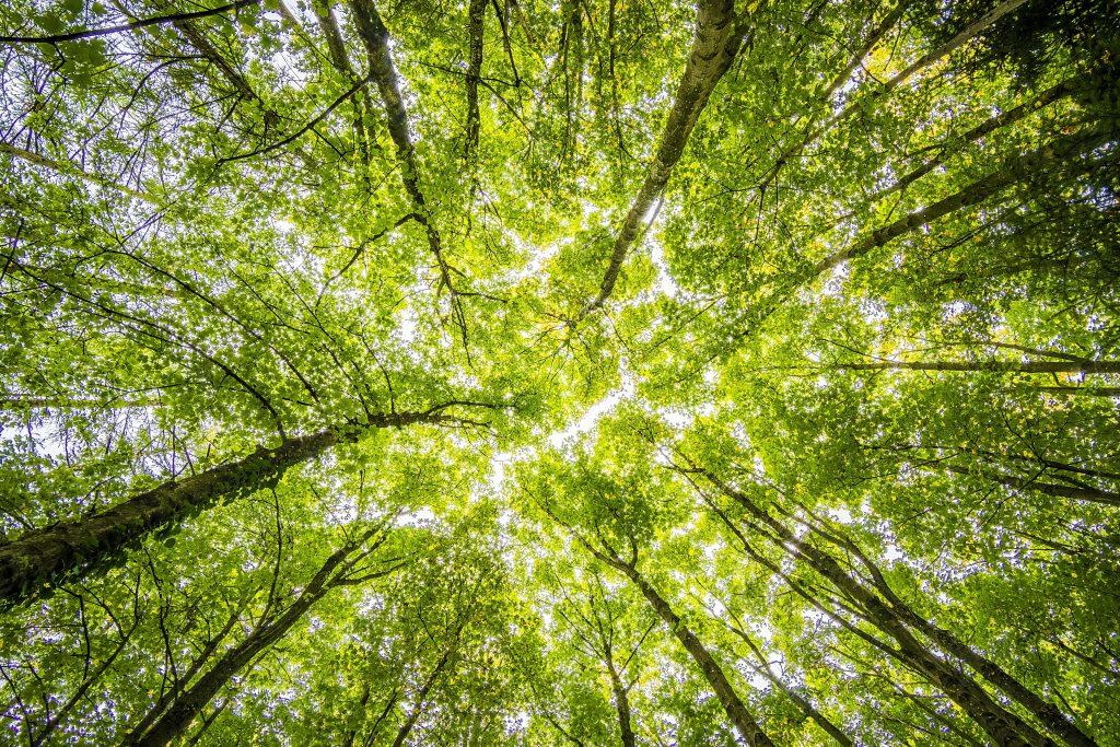 Día mundial del medio ambiente_Calendario Junio